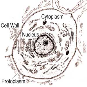 Diagram of a cell